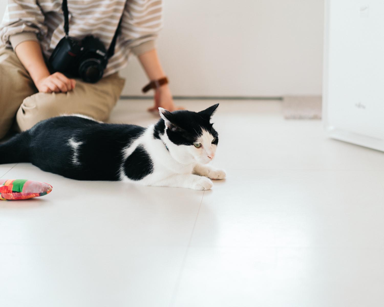 猫カフェTONEKO